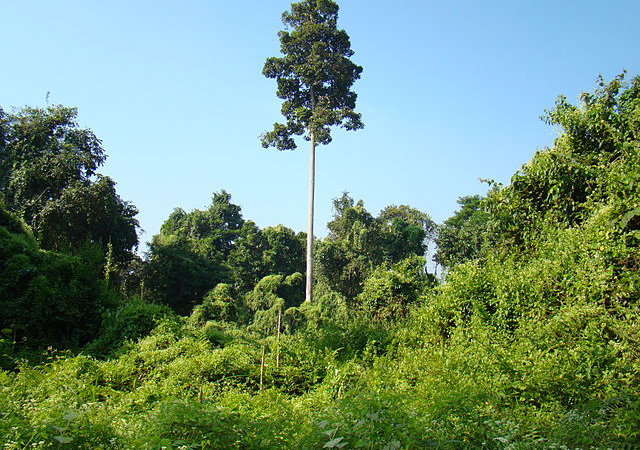Hoollongapar-Gibbon-Sanctuary