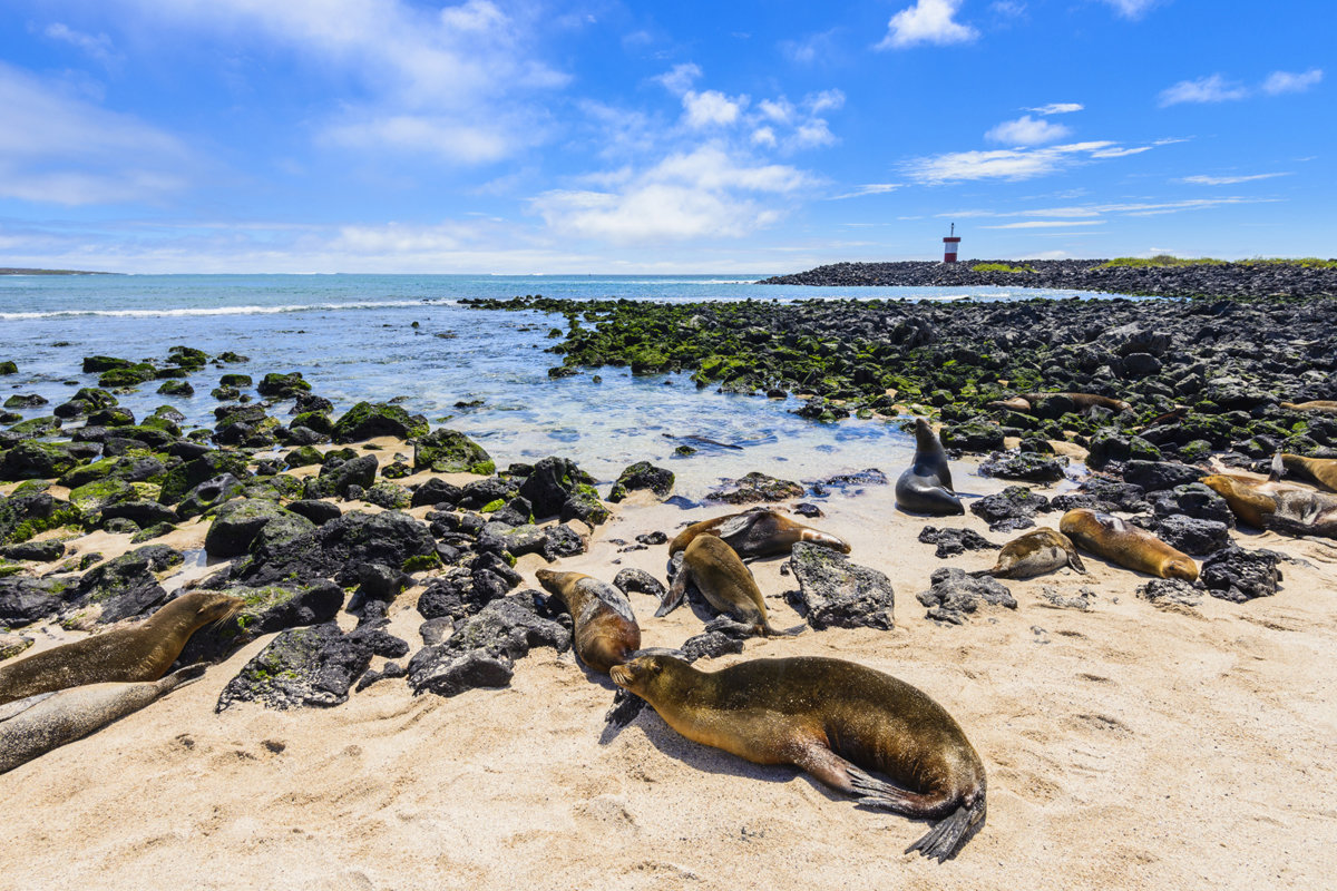 Galapagos Islands – The Best Place for Exploring Rare Wildlife Species
